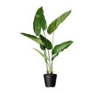 fejka plante artificielle en pot philodendron roux ikea france ikeapedia. Black Bedroom Furniture Sets. Home Design Ideas
